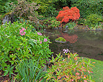 Kubota Garden, Seattle, WA: A small pond ringed with shrubs including hydrangeas and a Japanese maple in fall