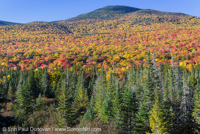Autumn foliage along Route 302 in the White Mountains, New Hampshire USA.