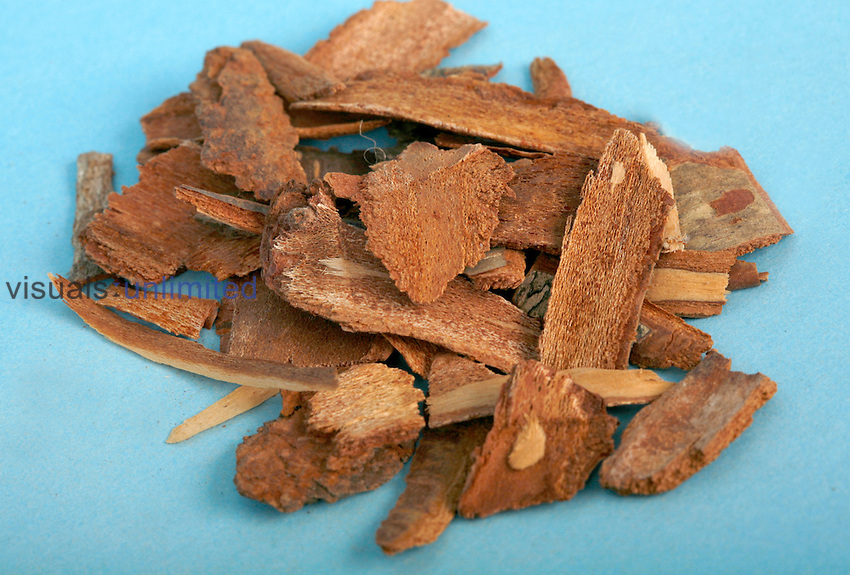 Cherry bark infused into a tea is used to treat sore throats, sores, burns, wounds. Royalty Free