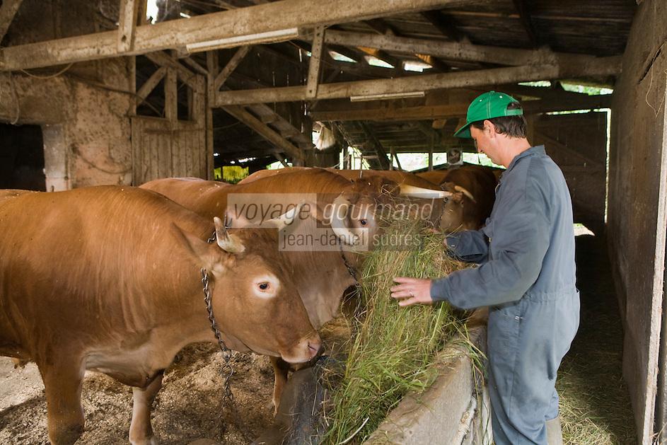Europe/France/Aquitaine/40/Landes/ Mugron: Elevage de boeufs de Chalosse chez Monsieur Ducasse // France, Landes, Mugron, Monsieur Ducasse's farm, Boeuf de Chalosse ox farming