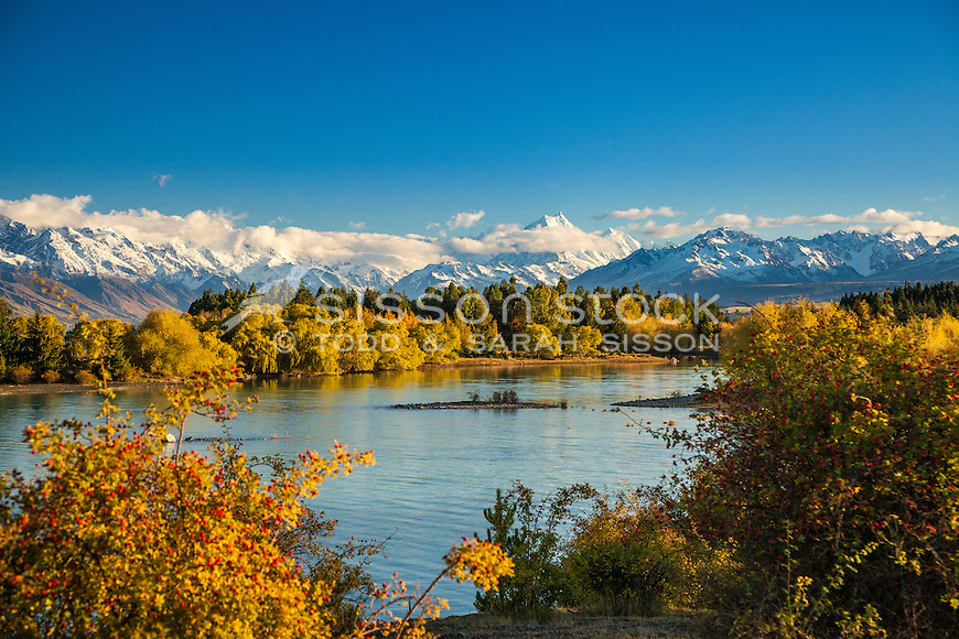 Image of vivid Autumn colours & rosehip berries on the shores of Lake Pukaki. Aoraki Mt Cook towering in background. Mackenzie Country, South Canterbury South Island New Zealand.