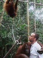 Brit, Leo Biddle, manager at the Matang Orangutan Rehabilitation Center with two Orangutans. (see text for more info)<br />