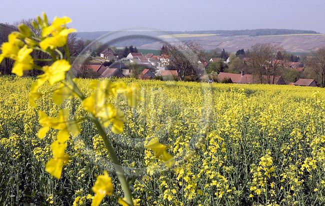 PASSY-GRIGNY - FRANCE - 16 APRIL 2007-- Turnip rape fields (Brassica Rapa Oleifera). -- PHOTO: JUHA ROININEN / EUP-IMAGES