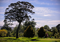A general view of the 8th. 2017 Asia-Pacific Amateur Championship Media and Partner Golf Day at Royal Wellington Golf Club in Wellington, New Zealand on Monday, 16 October 2017. Photo: Dave Lintott / lintottphoto.co.nz