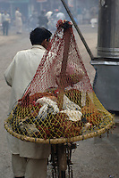 Chickens being transported in a specially made basket-and-net contraption on the back of a bicycle in the Old City of Lahore.