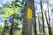 Blaze along the Mt Tecumseh Trail in the New Hampshire White Mountains. When this tree was blazed in autumn of 2011 paint dripped down the tree. And this is how the blaze looked in 2012 after proper parties removed the dripping paint from the tree.