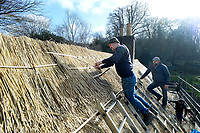 BNPS.co.uk (01202 558833)<br /> Pic: ZacharyCulpin/BNPS<br /> <br /> Pictured: Thatcher Ryan Satchell (left) work on the cottage.<br /> <br /> Master thatcher Scott Symonds puts the finishing touches to the new straw roof at the former home of Victorian author Thomas Hardy.<br /> <br /> The National Trust, which owns the picturesque cottage near Dorchester, Dorset, has closed the historic property for more than a month while it undergoes vital conservation work.<br /> <br /> On the inside new structural supports have been installed and the stone floor repointed after taking a battering from thousands of visitors over the years.<br /> <br /> And on the outside the roof has been re-thatched by Scott and his dad Dave who even appeared was an extra in the 2015 film adaptation of Hardy's Far From the Madding Crowd.