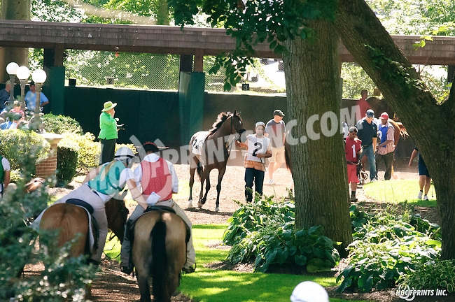 Howboutthemcowboys before The Strike Your Colors Stakes at Delaware Park on 8/4/16