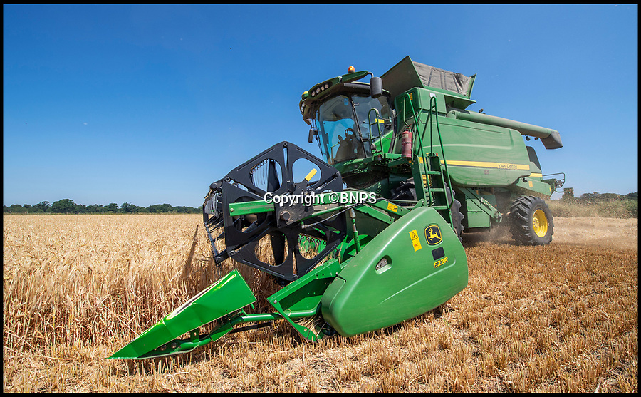 "BNPS.co.uk (01202 558833)<br /> Pic: PhilYeomans/BNPS<br /> <br /> The heatwave has caused an almost unheard of June harvest at a British farm.<br /> <br /> Bisterne Estate in Ringwood, Hants, produces seed barley, milling wheat and biscuit rye.<br /> <br /> Farm manager Martin Button says this is the earliest harvest there since 1976.<br /> <br /> They began harvesting their 750 acres of arable land on June 28, two weeks earlier than normal.<br /> <br /> However, they are expecting a significantly reduced yield as the barley grain is much smaller than in a typical year, which was been attributed to the dry summer.<br /> <br /> He said: ""We've never started in June in the 30 years I've been here.<br /> <br /> ""The earliest I can remember is July 2, and we would normally start the harvest between the 12th and 14th of July."