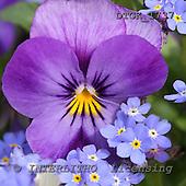 Flowers - portraits  photos