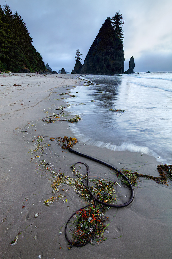 Sunset over ocean waves, sea stacks and bull kelp washed up on sandy beach, Shi Shi Beach, Olympic National Park, Washington Coast, USA