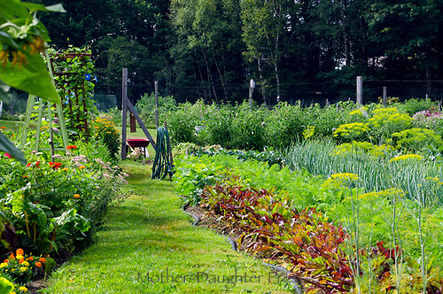 Community Garden plot in full summer, Maine, USA