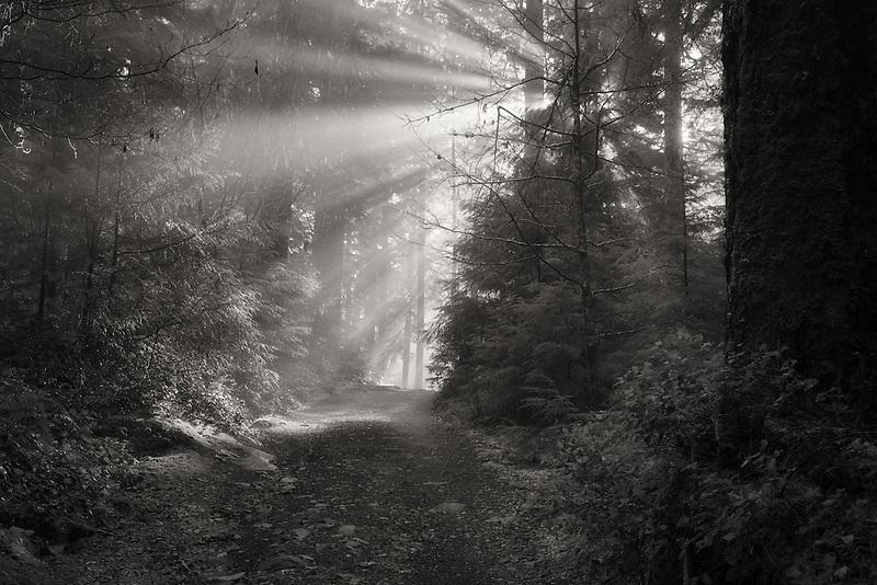 Road/trail along Opal Creek with sunburst/godrays. Opal Creek Wilderness, Oregon