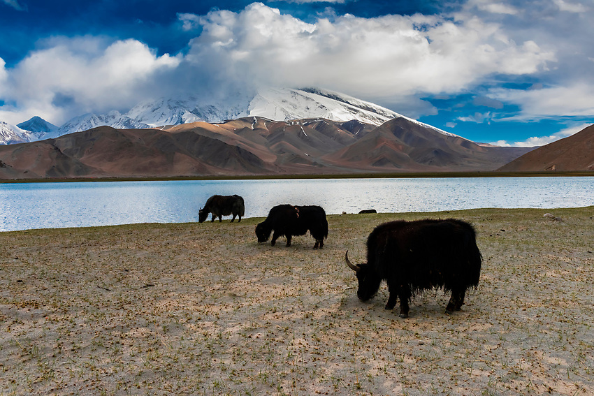 Yaks grazing along Lake Karakul  (11,811 feet) is the highest lake of the Pamir plateau, near the junction of the Pamir, Tian Shan and Kunlun mountain ranges. Surrounded by mountains which remain snow-covered throughout the year, the three highest peaks visible from the lake are Muztagh Ata (24,757 ft.) Kongur Tagh (25,025 ft.) and Kongur Tiube (24,704 ft.).The Karakoram Highway passing through the Pamir Mountains in Xinjiang China. It is the highest paved international road in the world; it connects Western China and Pakistan. It is one of the very few routes that cross the Himalayas and the most westerly of them. Historically, this was a caravan trail, one branch of the ancient Silk Road.
