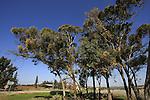 Israel, Shephelah, Road 353 by Kibbutz Beth Nir