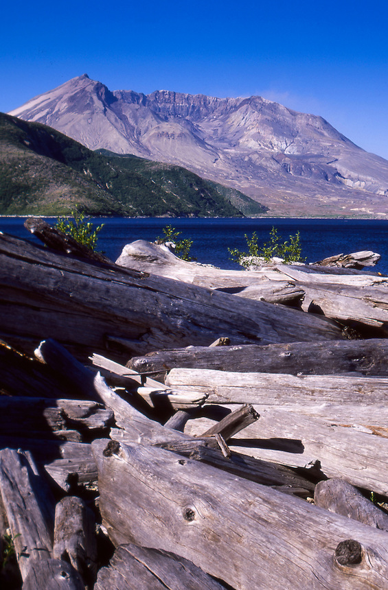 Mt. St. Helens from the Shore of Spirit Lake near Harmony, Mt. St. Helens National Volcanic Monument, Washington, US