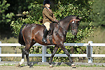 Championship for classes 1 to 6. Ridden. Showing. Brook Farm Training Centre. Essex. UK. 09/09/2018. ~ MANDATORY Credit Garry Bowden/Sportinpictures - NO UNAUTHORISED USE - 07837 394578