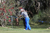 Pater Uihlein (USA) in a tree on the 1st during Round 1 of the ISPS HANDA Perth International at the Lake Karrinyup Country Club on Thursday 23rd October 2014.<br /> Picture:  Thos Caffrey / www.golffile.ie