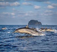 spinner dolphin, Stenella longirostris, jumping, leaping, Chichi-jima, Bonin Islands, Ogasawara Islands, UNESCO World Heritage Site, Japan, Pacific Ocean
