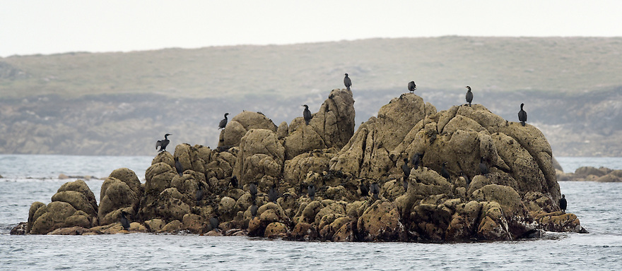 THE ISLES OF SCILLY SEABIRD RECOVERY PROJECT.SEABIRD COLONIES OFF THE COAST OF ANNET.<br />