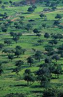 Europe/Chypre/Env de Peyia : Bois de Caroubiers
