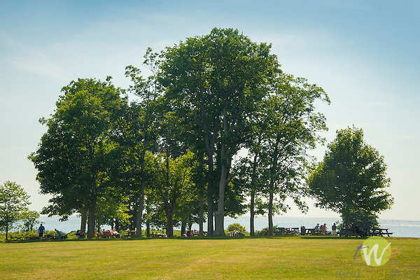 Harkness Memorial State Park. Shoreline treeline with picnckers.