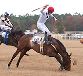 Colonial Cup Races - 11/23/2013
