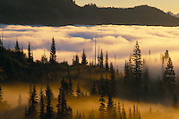 Fog in Stevens Canyon<br />