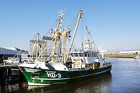 Nederland Den Helder 2015. Viskotters in de haven van Den Helder