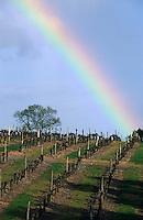 Europe/France/Pays de la Loire/49/Maine-et-Loire/Thouarcé: Le vignoble AOC côteaux du Layon et arc en ciel