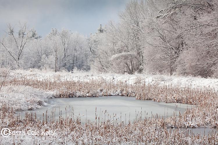 Wetland along the floodplain of the Nashua River in Ayer, MA, USA