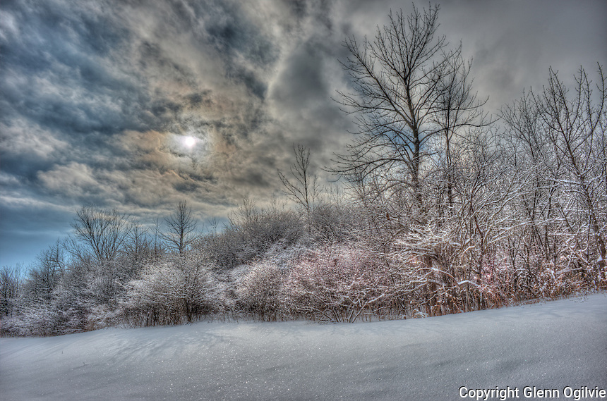 An illusive sun is about to go back into hiding above the hoar frost covered hawthorns and wild fruit trees at the Blackwell Sideroad landfill site.