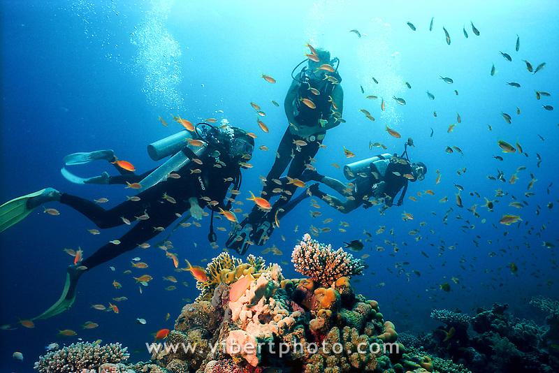 Plongée en Mer Rouge Egypte