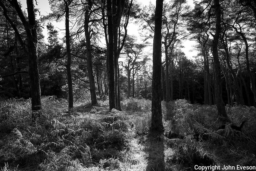 Woodland on Longridge Fell, Lancashire.