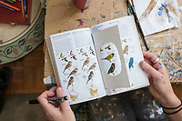 """Artist and illustrator Jada Fitch uses the bird identification guide """"Sibley Birds East"""" as she paints a portrait of a Black-capped Chickadee in her living room, which also doubles as her art studio, in Portland, Maine, USA, on Fri., July 28, 2017. Fitch uses bird identification books as inspiration for portraits of birds used in her """"Home Tweet Home"""" birdhouses, which sell out in minutes on her Etsy website."""