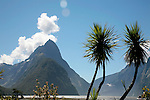 Cabbage trees and Mitre Peak, Milford Sound, Fiordland, New Zealand