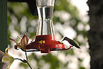 Hummingbird on classic feeder.