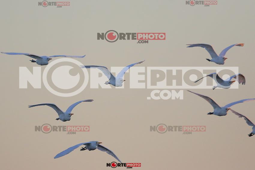 Aves en la Presa