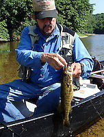 NWA Democrat-Gazette/FLIP PUTTHOFF <br /> Tube baits worked best for catching smallmouth bass June 17, 2016 on Flat Creek. Tonkinson caught and released several, including this smallmouth he caught about noon.
