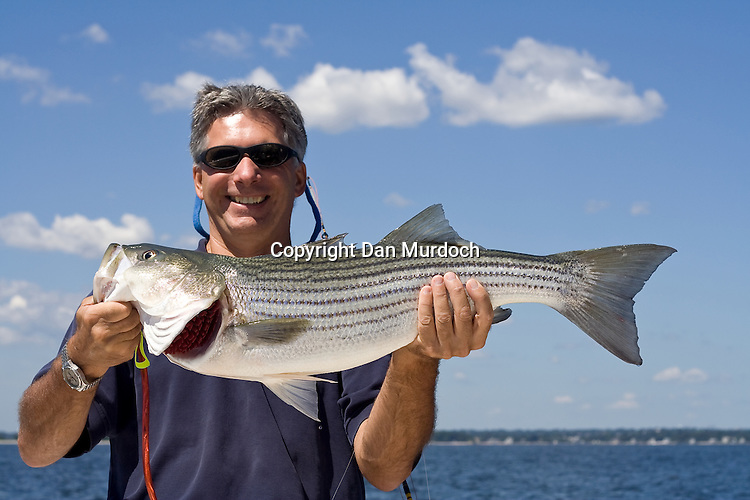 showing off a nice striped bass