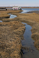 Salt Marsh; Spartina alterniflora; NJ, Cape May Co.