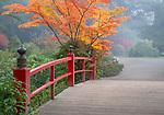 Seattle, Washington:<br /> Kubota Gardens city park. Fall colors and fog, Heart Bridge
