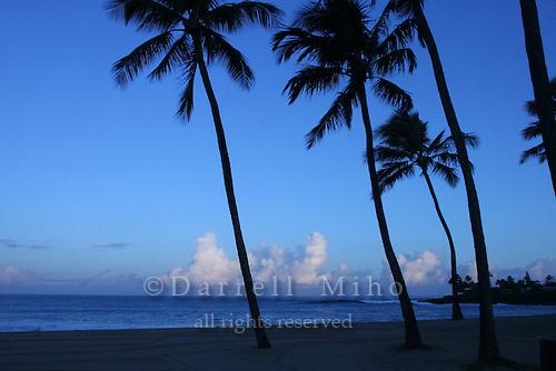 Feb. 17, 2006; Waimea, Oahu, HI - Palm trees at Waimea Bay on the north shore of Oahu...Photo Credit: Darrell Miho.© Darrell Miho