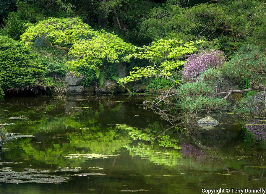 Seattle Washington:<br /> Kubota Garden, spring pond reflections