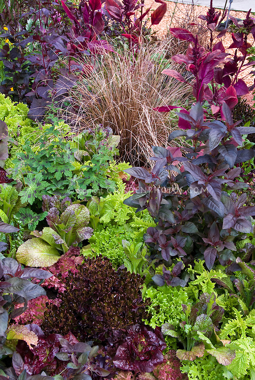 Amaranthus, red and green lettuce, and salad greens, mix of vegetables, herbs, perennials, Geranium Samobor, lettuces, ornamental grass mixed vegetables - tastes good, looks good!