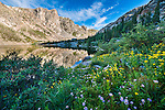 wildflowers on summer morning at Mirror Lake in Rocky Mountain National Park, Colorado, USA