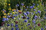 Vicki and Bill Cotton's garden