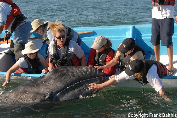 women touching a gray whale calf