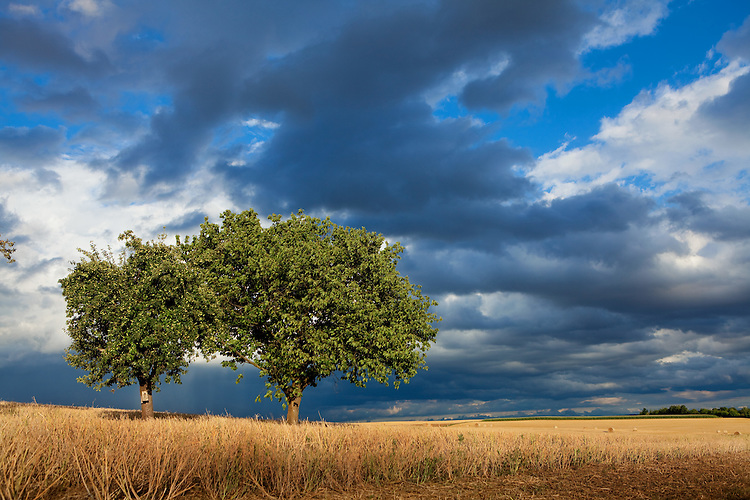 Europa, DEU, Deutschland, Hessen, Wetterau, Eberstadt (Lich), Sommer, Agrarlandschaft, Getreidefeld n. d. Ernte, Himmel, Wolken, Cumuluswolken, Wolkenstimmung, Baeume, Regenwolken, Kategorien und Themen, Natur, Umwelt, Landschaft, Jahreszeiten, Stimmungen, Landschaftsfotografie, Landschaften, Landschaftsphoto, Landschaftsphotographie, Wetter, Himmel, Wolken, Wolkenkunde, Wetterbeobachtung, Wetterelemente, Wetterlage, Wetterkunde, Witterung, Witterungsbedingungen, Wettererscheinungen, Meteorologie, Bauernregeln, Wettervorhersage, Wolkenfotografie, Wetterphaenomene, Wolkenklassifikation, Wolkenbilder, Wolkenfoto<br /> <br /> [Fuer die Nutzung gelten die jeweils gueltigen Allgemeinen Liefer-und Geschaeftsbedingungen. Nutzung nur gegen Verwendungsmeldung und Nachweis. Download der AGB unter http://www.image-box.com oder werden auf Anfrage zugesendet. Freigabe ist vorher erforderlich. Jede Nutzung des Fotos ist honorarpflichtig gemaess derzeit gueltiger MFM Liste - Kontakt, Uwe Schmid-Fotografie, Duisburg, Tel. (+49).2065.677997, ..archiv@image-box.com, www.image-box.com]