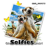 Howard, SELFIES, paintings+++++Meerkats selfie,GBHRPROV173,#Selfies#, EVERYDAY